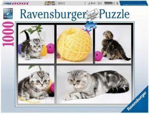 Puzzle Ravensburger 1000 dílků - Britské krátkosrsté kočky  195459