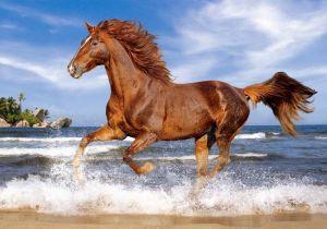 Puzzle Castorland 500 dílků - kůň na pláži 52578