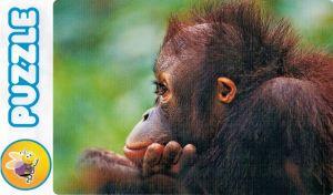 Puzzle Tactic 54 dílků MAXI -   v plechovce - orangután  40238