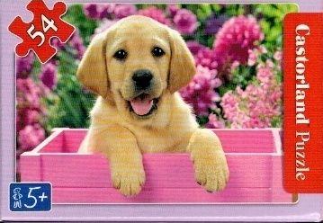 puzzle Castorland 54 dílků mini - kočky a pejsci - béžový Labrador