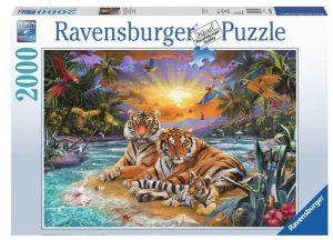 puzzle Ravensburger  2000 dílků  Tygři při západu slunce   166244