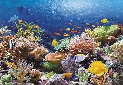 Castorland - Korálový útes - Puzzle 1000 dílků art. 101511