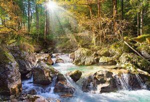 Castorland - Prosluněný lesní potok  - Puzzle 2000 dílků