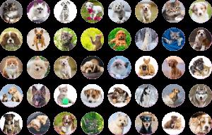 Goliath - STICKER FUN 80 samolepek - Cats & Dogs