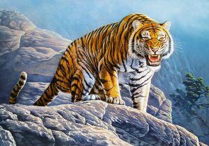 Puzzle Castorland 500 dílků - Tygr 53346