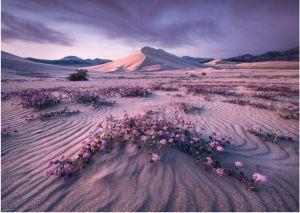Heye - puzzle 1000 dílků -  Pustina při východu slunce - Alexander von Humboldt 29945